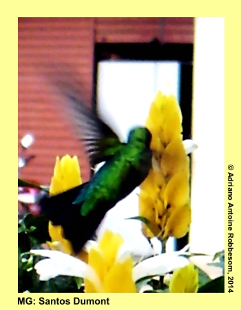 adrianoantoine_bestof_2005_01_001