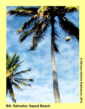 adrianoantoine_bestof_2006_07_012